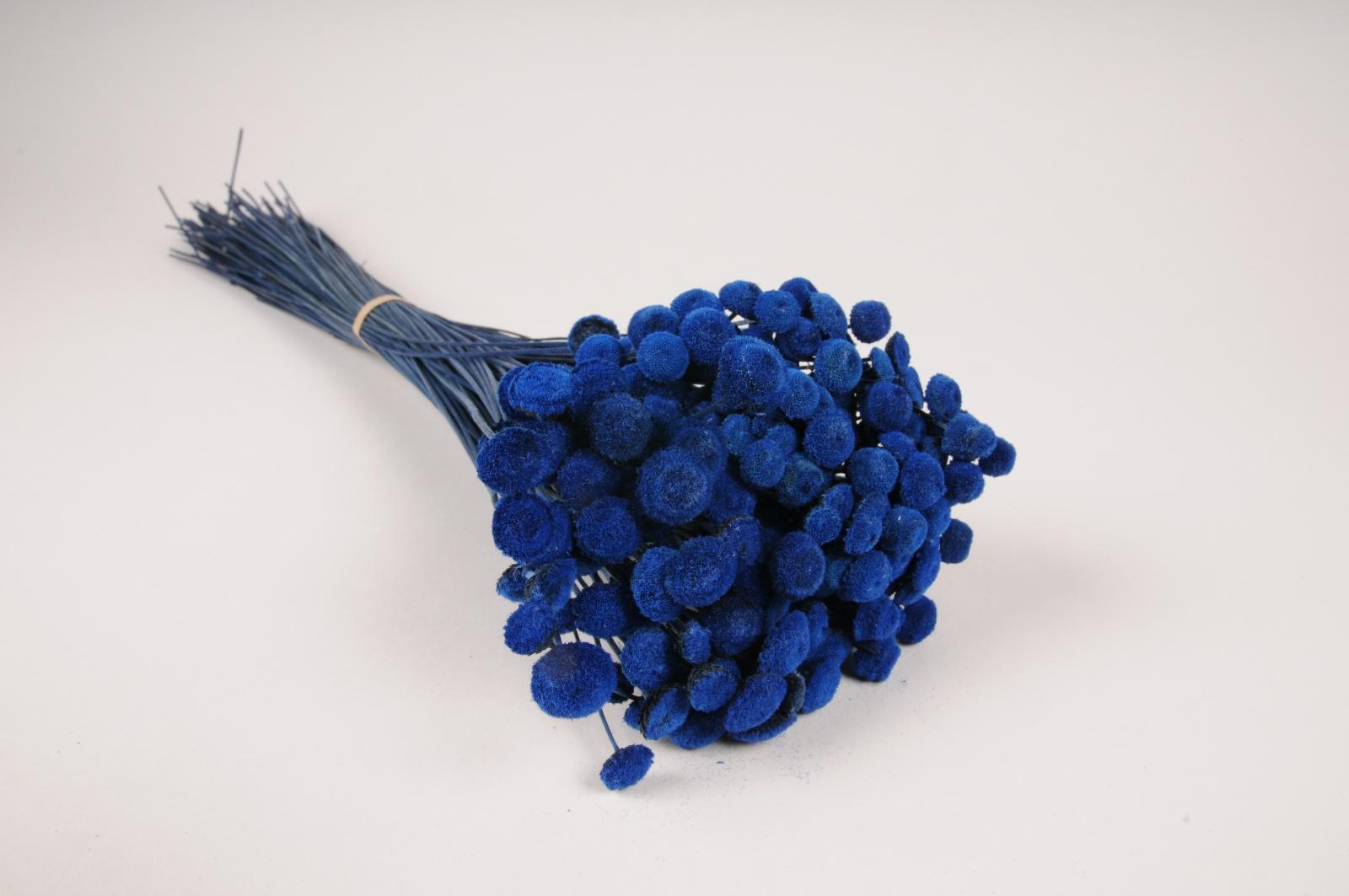 x293ab Botte de botao bleu séché H53cm