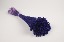 x294ab Amarelino séché violet H45cm