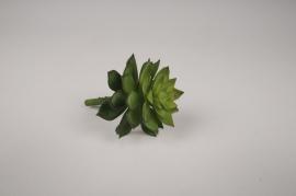 x294fd Succulente artificielle verte H10cm