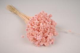 x297ab Fleurs des collines séchées rose H50cm