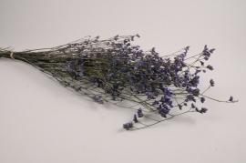 x303ab Limonium préservé violet H70cm