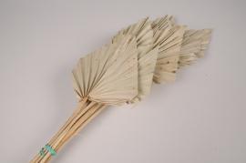 x314ab Palm spear séché naturel H55cm