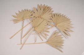x315ab Natural dried palm sun H55cm