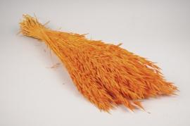 x336ab Bunch of orange dried oats H70cm
