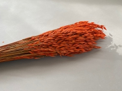 x337ab Bunch of terracotta dried oats H70cm