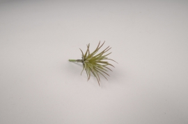 x340fd Sachet de 6 tillandsia artificiel vert H7cm