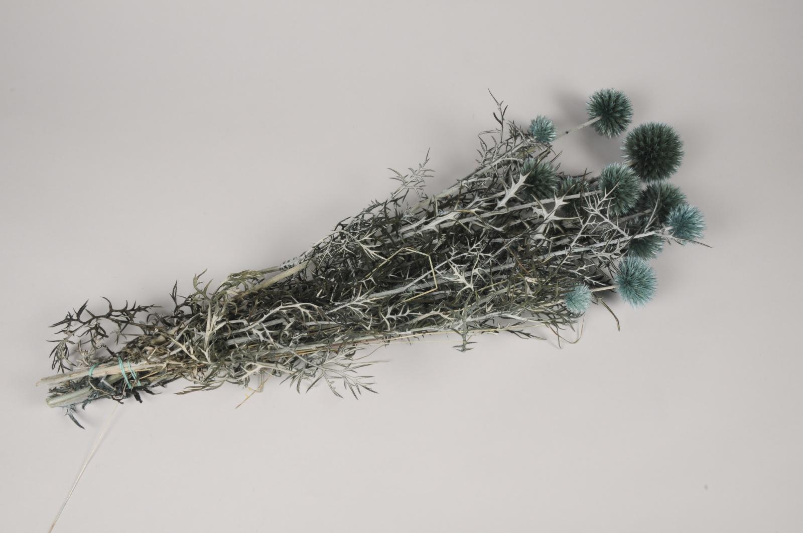 x343ab Echinops préservé bleu H70cm