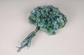 x348ab Hortensia stabilisé bleu H35cm