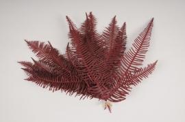 x354ab Red stabilized fern H27cm