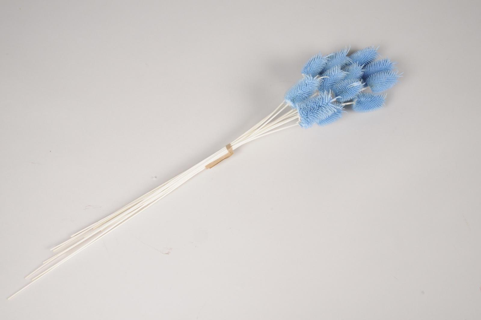 x371ab Chardon séché bleu H45cm