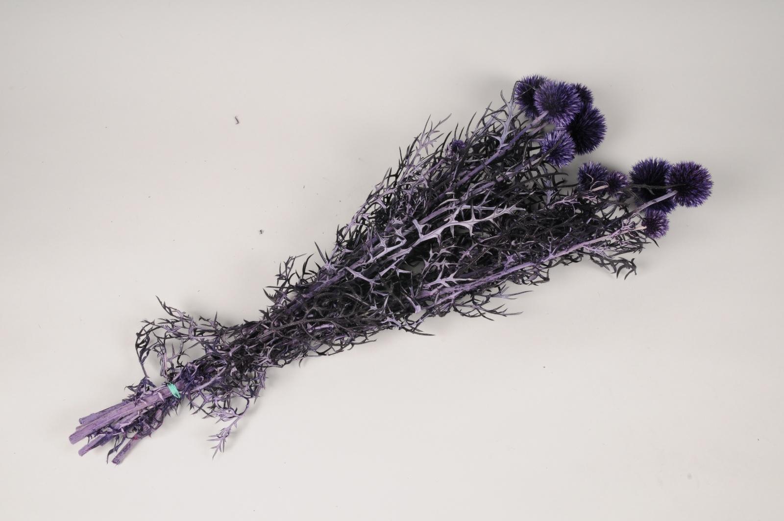 x387ab Echinops préservé violine H70cm