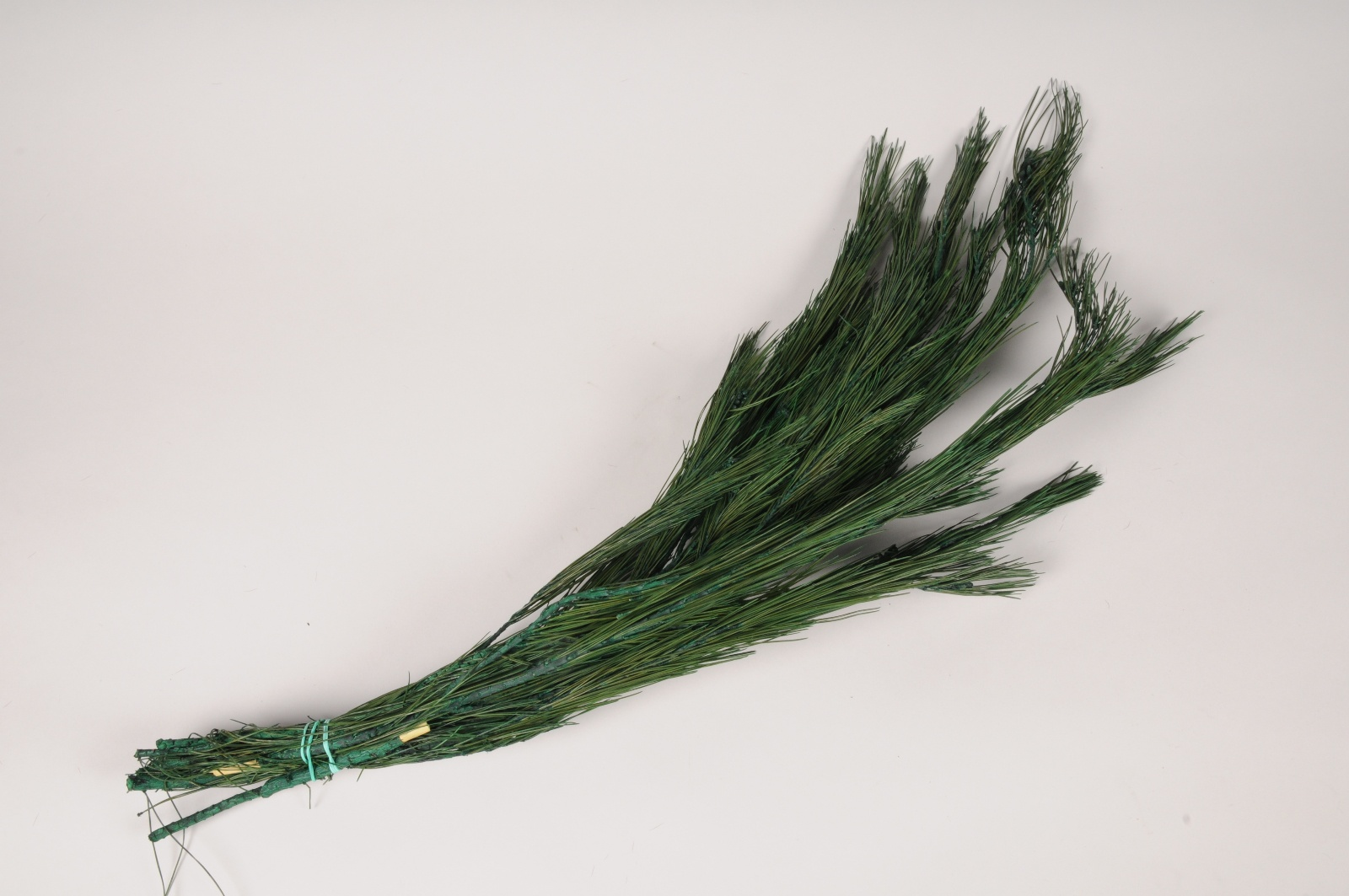 x390ab Pin préservé vert H65cm