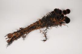 x392ab Echinops préservé marron H70cm
