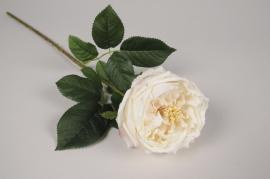 x397ee Rose ancienne artificielle crème H60cm