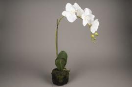 x420mi Pot phalaenopsis blanc artificiel H58cm