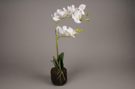 x430mi Artificial white phalaenopsis pot H50cm