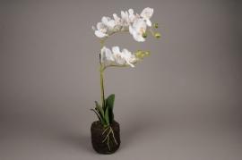 x430mi Pot phalaenopsis blanc artificiel H50cm