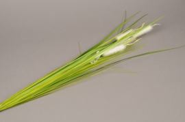 x448di Artificial green and white bulrush H75cm