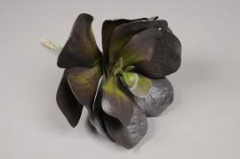 x481di Succulente artificielle bordeaux H34cm