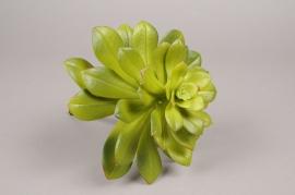 x502di Succulente artificielle verte H29cm