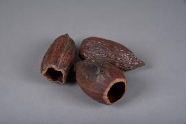 x508mi Cabosse de cacao séchée D7cm H16cm