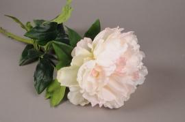 x540di Pivoine artificielle crème et rose H76cm