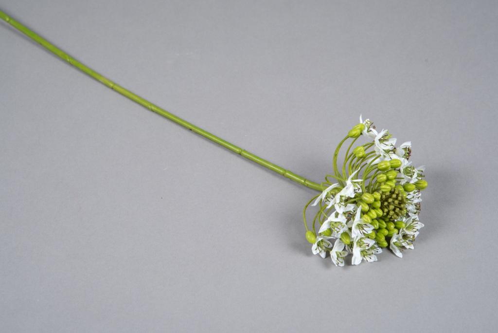x563di Ornithogalum artificiel blanc H63cm