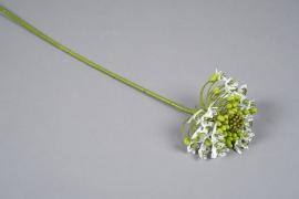 x563di White artificial ornithigalum H63cm