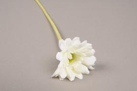 x568jp Gerbera artificiel blanc H36cm