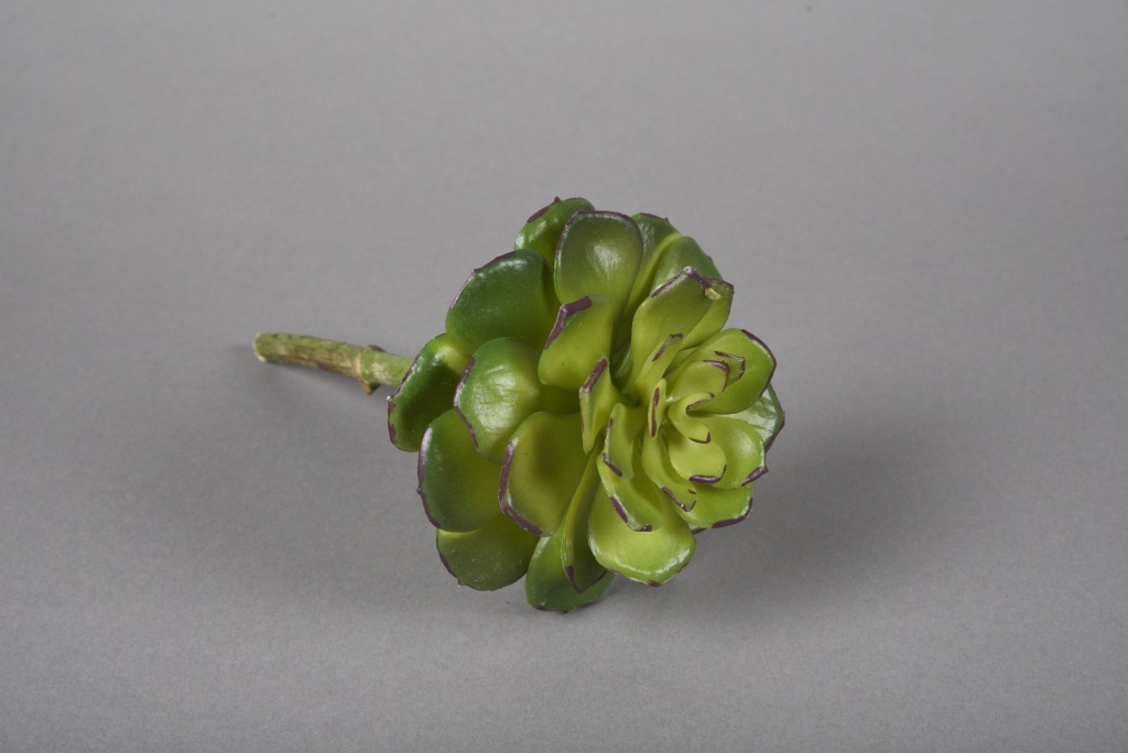 x612jp Echeveria artificiel vert H23cm