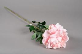 x636jp Artificial pink peony H80cm