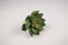 x652di Succulente artificielle verte H12cm