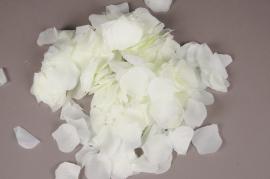 x664jp Paquet de 3000 pétales de roses artificielles crème