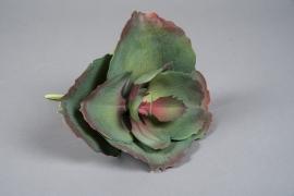 x665mi Succulente artificielle verte et pourpre H25cm