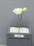 x701nn Artificial cream ranunculus H17cm