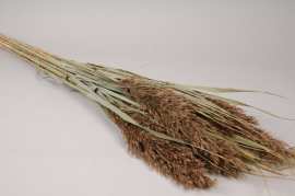 x770mi Bunch of natural dried graminaceous H109cm