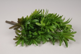 x791mi Piquet de podocarpus vert H34cm