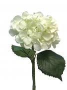 x837nn Hortensia artificiel crème H48cm