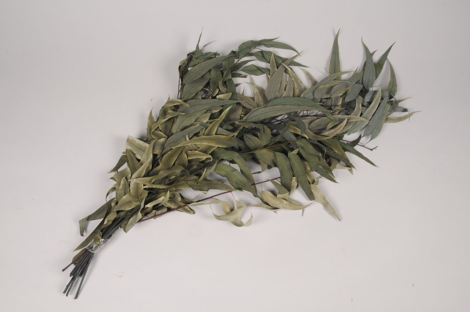x884mi Eucalyptus longifolia stabilisé vert H75cm