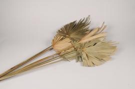 x909mi Palm spear séché naturel H125cm