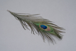 x943wg Bag of 3 natural peacock feathers