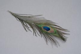 x943wg Sachet de 3 plumes de paon naturel