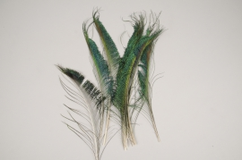 x959wg Bag of 10 natural peacock feathers H37cm
