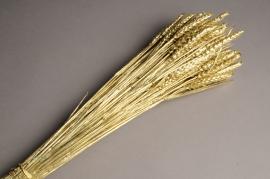 xx06kh Gold dried wheat