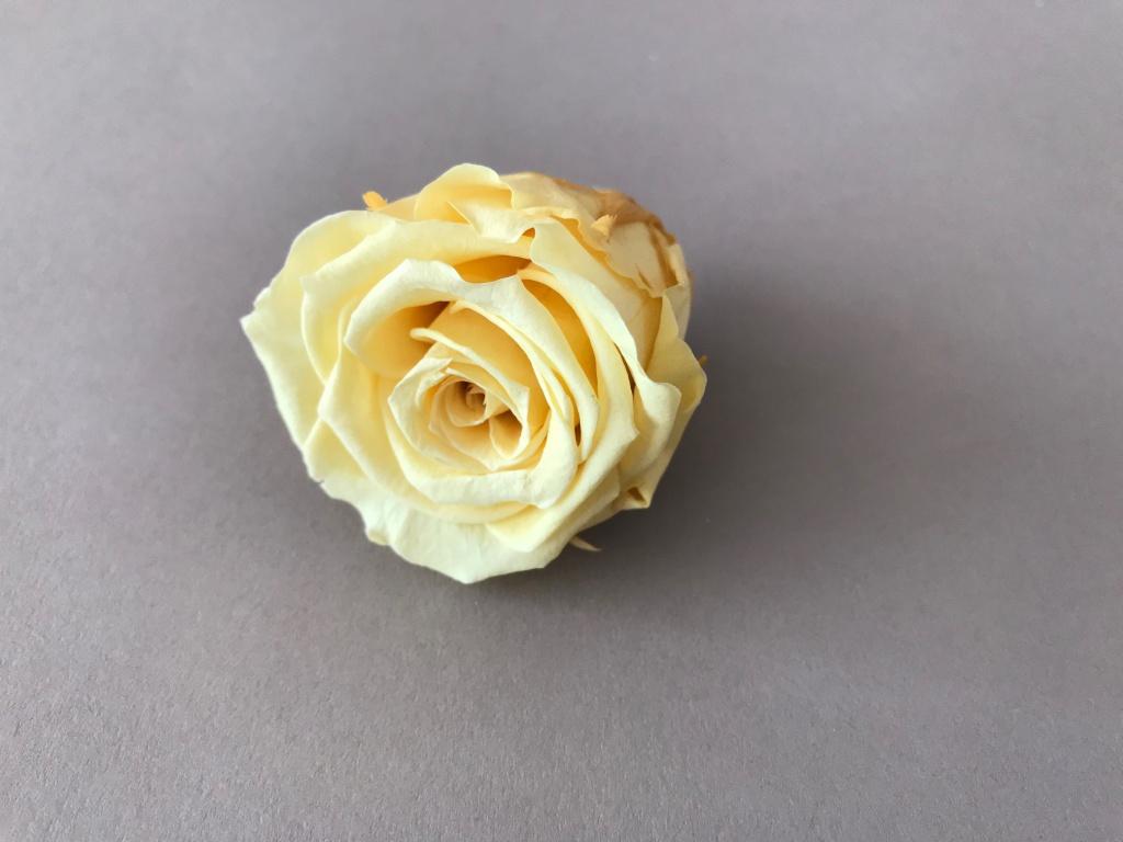 ys02gb Boîte de 12 roses préservées jaunes