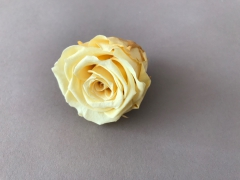 ys02gb Box of 12 preserved yellow roses