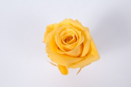 ys13gb Box of 12 preserved yellow roses