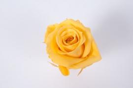 ys13gb Boîte de 12 roses préservées jaunes