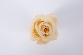 ys15gb Boîte de 12 têtes de roses préservées jaune pâle