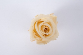 ys15gb Box of 12 preserved light yellow roses